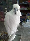 鳥:調整大小20081203521.jpg