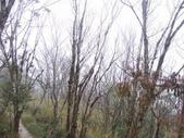 太平山翠峰湖山毛櫸步道:調整大小100_0791.JPG