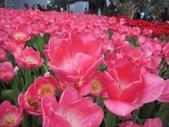 花博--春之花頌:IMG_4816.JPG