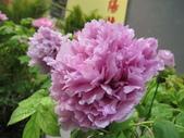 花博--春之花頌:IMG_7286_調整大小.JPG