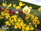 花園:IMG_8206