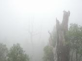 太平山翠峰湖:調整大小DSC_0464.JPG