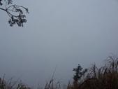 太平山翠峰湖山毛櫸步道:調整大小100_0774.JPG