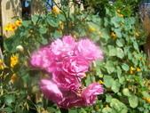 菜花園:調整大小103_1620.JPG