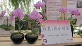 99新社花海:IMG_8813.JPG