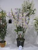 2011台北國際蘭展:IMG_6391_調整大小.JPG