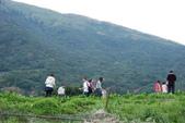 竹子湖:DSC_0141_調整大小_調整大小.JPG