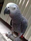 鳥:調整大小20081023130.jpg