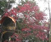 雪見森林遊憩區:IMG_8938.JPG