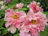 花博--春之花頌:IMG_7278_調整大小.JPG