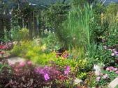 菜花園:調整大小103_1602.JPG