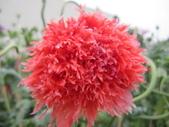 花博--春之花頌:IMG_6785_調整大小.JPG
