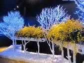 2011台北國際蘭展:IMG_6059_調整大小.JPG