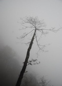 太平山&見晴古道:調整大小旋轉DSC_0892.JPG