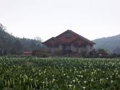 竹子湖:複製 -102_2361_調整大小.JPG