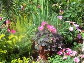 菜花園:調整大小103_1605.JPG