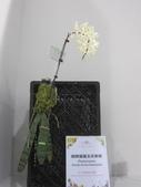 2011台北國際蘭展:IMG_6247_調整大小.JPG