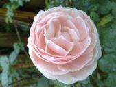 花球&草花:調整大小200903241142.jpg