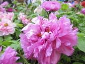 花博--春之花頌:IMG_7250_調整大小.JPG