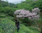 100之櫻花:DSC_0232.JPG