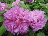 花博--春之花頌:IMG_7306_調整大小.JPG