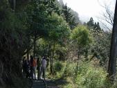 太平山翠峰湖山毛櫸步道:調整大小DSC_1803.JPG