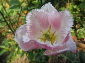 99-----菜花園:IMG_4510_調整大小