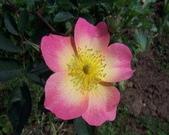 菜花園:調整大小102_9726.JPG