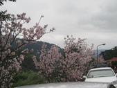 99---櫻花林:IMG_5052_調整大小