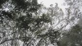 雪見森林遊憩區:IMG_9024.JPG