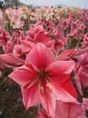 花博--春之花頌:IMG_5843.JPG
