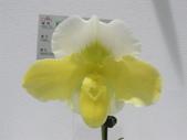 2011台北國際蘭展:IMG_6357_調整大小.JPG