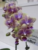 2011台北國際蘭展:IMG_6240_調整大小.JPG