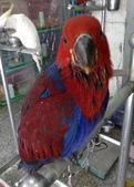 鳥:調整大小20081203517.jpg