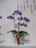 2011台北國際蘭展:IMG_6191_調整大小.JPG