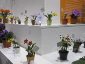 2011台北國際蘭展:IMG_6261_調整大小.JPG