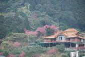 竹子湖:DSC_0114_調整大小_調整大小.JPG