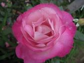99---玫瑰:IMG_5566日出_調整大小