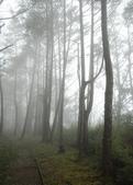 太平山&見晴古道:調整大小旋轉DSC_0913.JPG