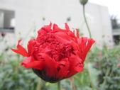 花博--春之花頌:IMG_6781_調整大小.JPG