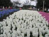 花博--春之花頌:IMG_4763.JPG