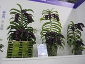 2011台北國際蘭展:IMG_6366_調整大小.JPG