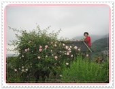 2011玫瑰:IMG_0803_調整大小.JPG