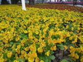 花博--春之花頌:IMG_6771_調整大小.JPG