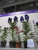 2011台北國際蘭展:IMG_6383_調整大小.JPG