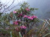 太平山翠峰湖山毛櫸步道:調整大小100_0903.JPG