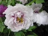花博--春之花頌:IMG_7260_調整大小.JPG