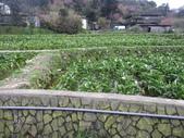 竹子湖:IMG_6442_調整大小_調整大小.JPG