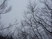 太平山翠峰湖山毛櫸步道:調整大小100_0800.JPG