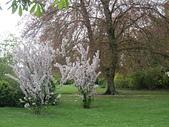 花園:IMG_8254